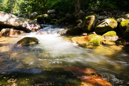 dense forest: Mountain river with the purest water in the dense forest