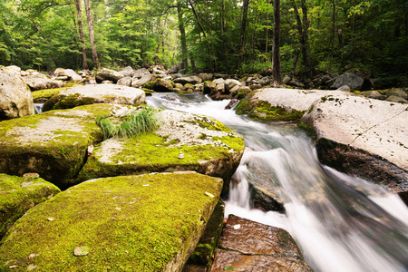 Large stones in the river covered with moss in wild forest. Russian Far East. Stock Photo