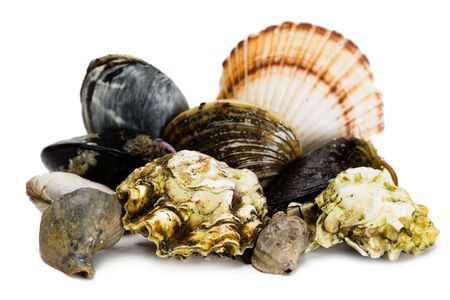 Live freshly caught sea mollusks isolated on white