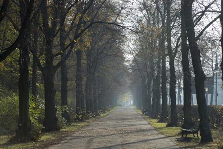 path between trees Фото со стока