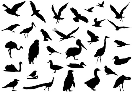 Shadows of birds created a line drawing. Created by real photograph birds. Vector