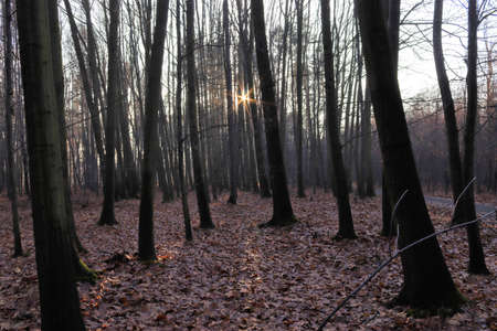 Sunset in the autumn forest.