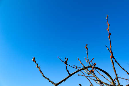 Branch with buds with a blue background.