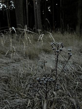 dry flower Stock fotó