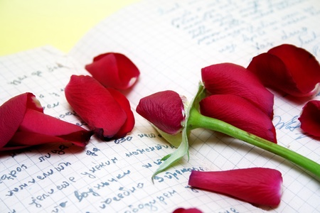 rose petals on the old script over yellow background Stock Photo - 9099470