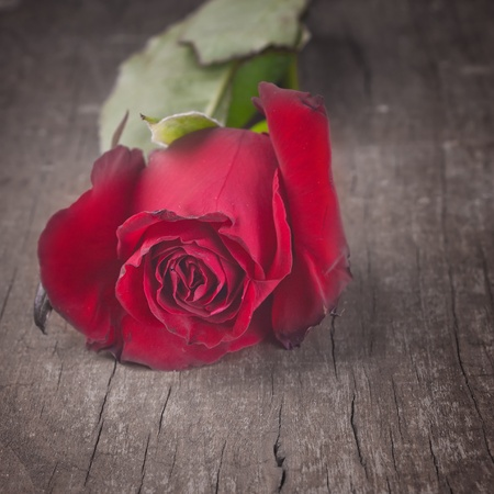 Red Rose on old wooden plank