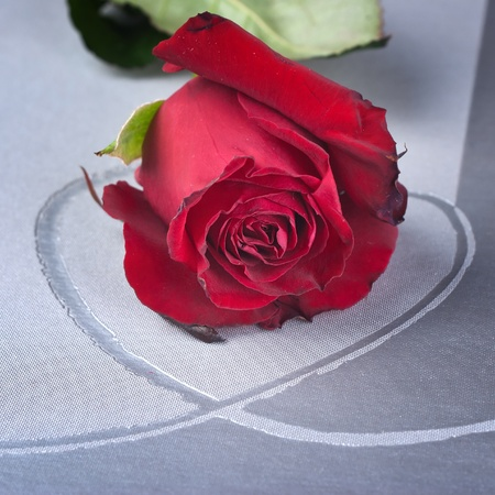 red rose on heart-shaped background photo