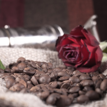 close up of red rose on coffee beans photo