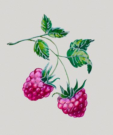 aquarel frambozen