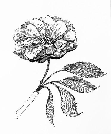graphic flower