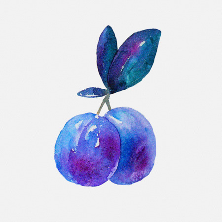 plums: Watercolor plums