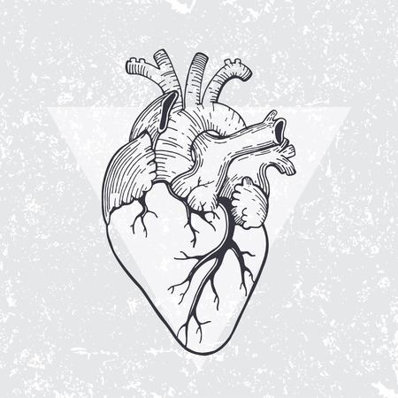 Vector Realistic Anatomical Heart Royalty Free Cliparts, Vectors ...