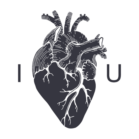 Vector Realistic Anatomical Heart. I Love You Royalty Free Cliparts ...