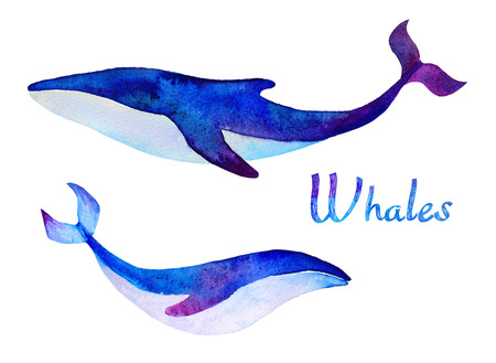 whales: Whales. Watercolor set. Sea life Stock Photo