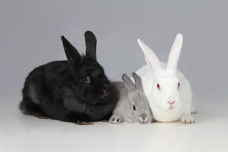 rabit: A biracial bunny rabit is loved by his parents