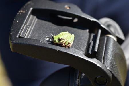 pedestal: frog sunbathing on a pedestal Stock Photo