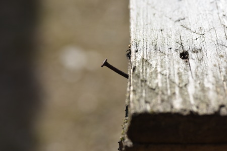rusty nail: rusty nail stuck in the wood