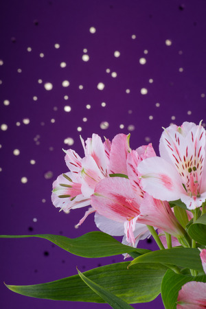 Beautiful delicate bouquet of flowers alstroemeria on a purple background with bokeh
