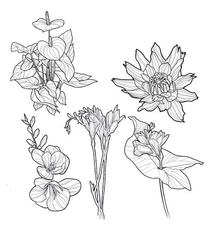 Sketch of a flower drawn with lines