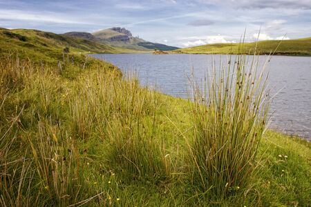 Tussock at Loch Fada with Old Man of Storr in the background on Isle of Skye, Scotland Фото со стока