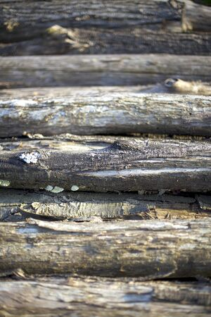 Stack of cut tree trunks lying on ground. Stockfoto