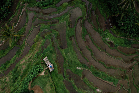 Aerial view on top. Two lovers of young people lie on a wooden bridge. Happy couple traveling at Bali, rice terraces of Tegalalang, Ubud. Honeymoon summer travel at Indonesia. Happy people. Stok Fotoğraf