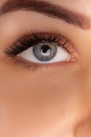 Eyelash Extension Procedure. Close up view of beautiful female eye with long eyelashes, smooth healthy skin. Фото со стока