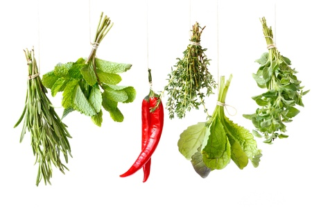 Bundles of fresh spices herbs handing over white background. photo