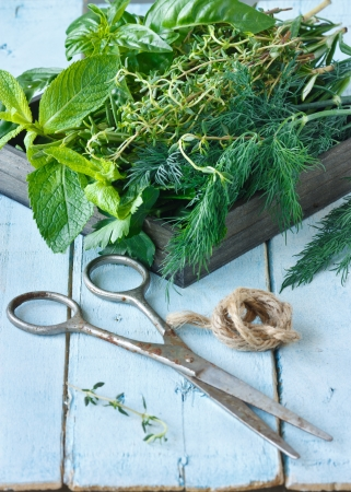medical herbs: Fresh herbs and old scissors on a blue  board.