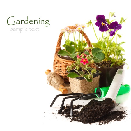 Potted Daisy flowers, pansies, and strawberry with garden tools on a white background. photo