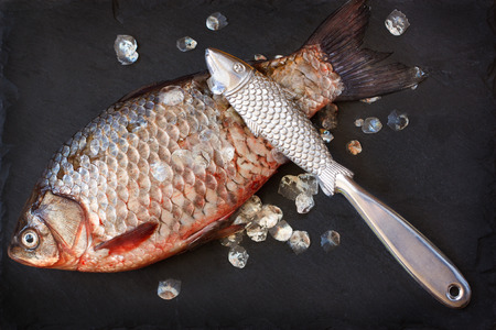 scaler: Fresh carp with fish scaler for removal of fish scales on a black slate board. Stock Photo