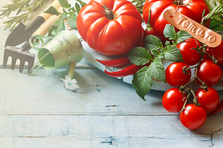 summer fruits: Fresh ripe tomatoes and gardening tools on an old wooden board. Stock Photo