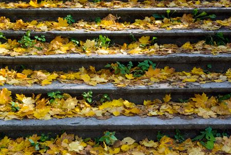 Part of stone staircase covered by maple yellow leaves in old park, Gatchina, Russia photo