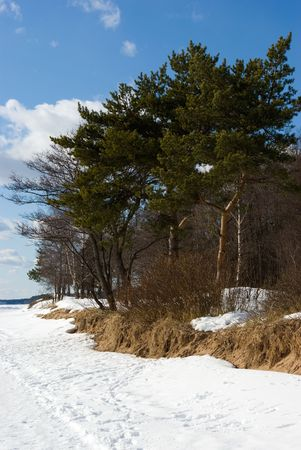 Coast of Gulf of Finland in early spring, Komarovo, Russia Stock Photo - 5093912
