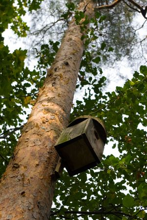 Birdhouse on a pine-tree photo
