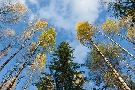 Bottom view of autumn trees photo