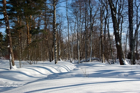 Winter forest landscape in sunny day. Russia, Leningrad region Stock Photo - 9396468