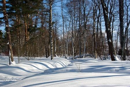 Winter forest landscape in sunny day. Russia, Leningrad region Stock Photo - 9396468