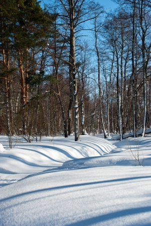 Winter forest landscape Stock Photo - 15819535