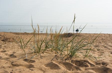 Komarovo beach of Gulf of Finland in Saint-Petersburg suburg, Russia Stock Photo