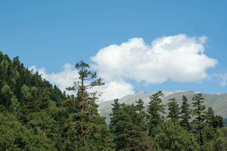 Greater Caucasus mountains landscape in Arkhyz, Karachay?Cherkessia; Russia