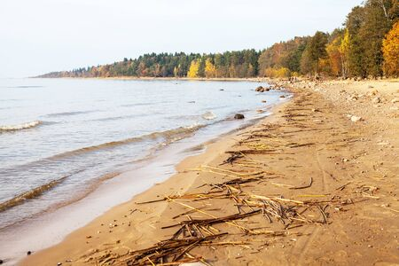 The coast of Gulf of Finland in autumn, St. Petersburg, Russia Stock fotó