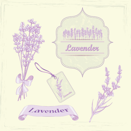 Lavender Illustration