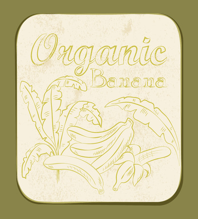 Fresh Organic Banana Label. Vector illustration. Retro fruitl design. Vector old paper texture background.  Vector
