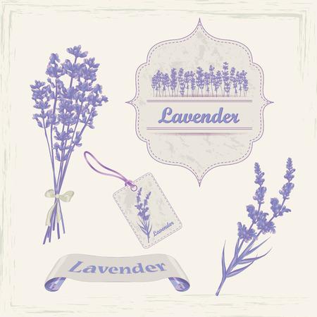 lavender oil: Lavender background, product labels. Business or invitation card, flyer design, packaging design. Vector illustration.