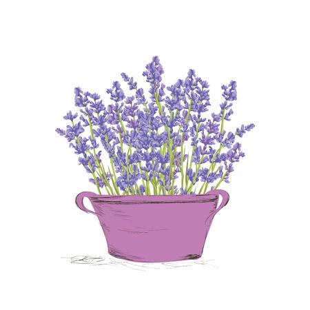 flower gardens: Dibujado a mano flores de lavanda en una olla vintage. Diseño dibujado mano de Gracias tarjeta, tarjeta de felicitación o invitación. Ilustración del vector. Vectores