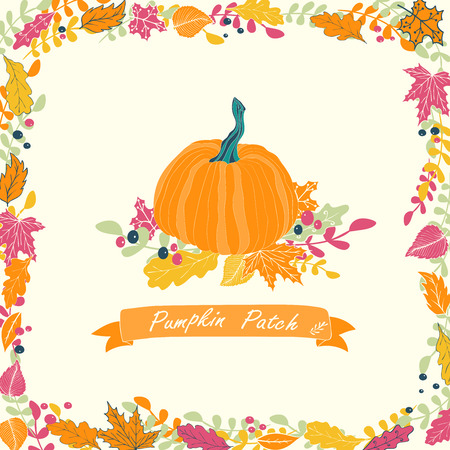 pumpkin patch: Pumpkin patch card design. Vector illustration of pumpkin with flowers and ribbon.