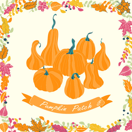Pumpkin patch card design. Vector illustration of pumpkin with flowers and ribbon.
