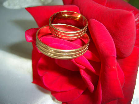 Wedding rings on a rose Stock Photo