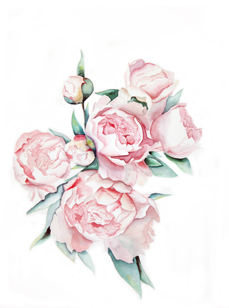 peonies: peonies on a white background
